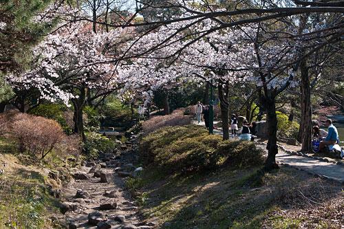 桜便り2-8