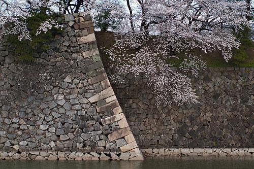 名古屋城桜-1