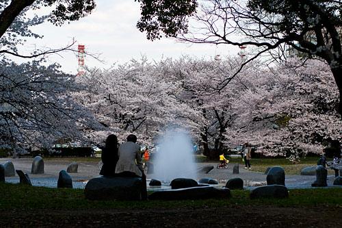 名古屋城桜-14