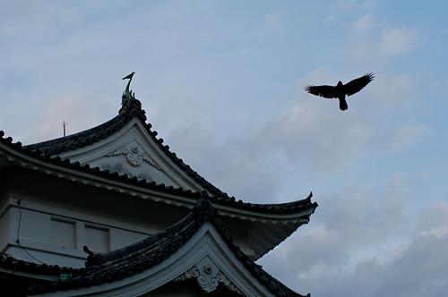 名古屋城桜-16