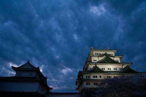 名古屋城桜-17