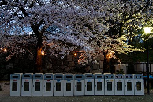 名古屋城桜-18