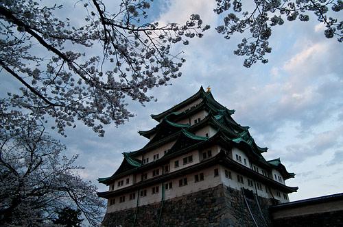 名古屋城桜-7