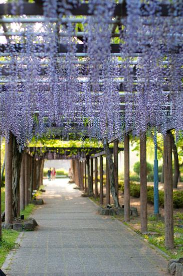 栄から名城公園-10