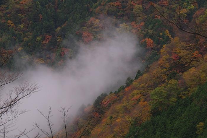 雲上の世界 2 ~大札山の紅葉 その7~