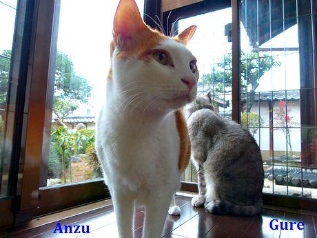 anzugure3_20120206135915.jpg