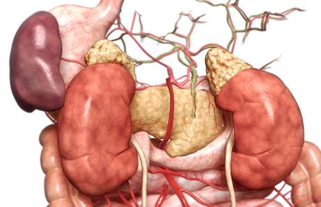 090730-spleen-vestigial-organs_big.jpg