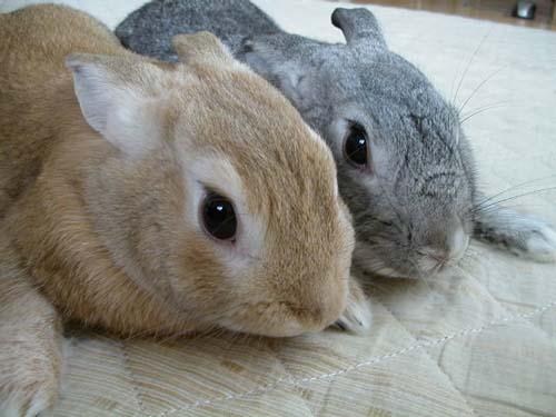 ウチのウサギさん達
