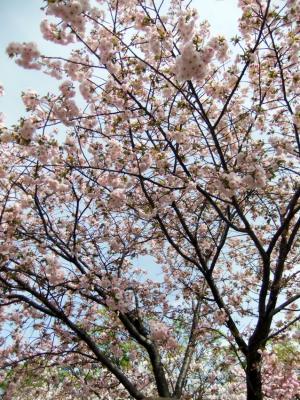 2011_0417ブログ0078