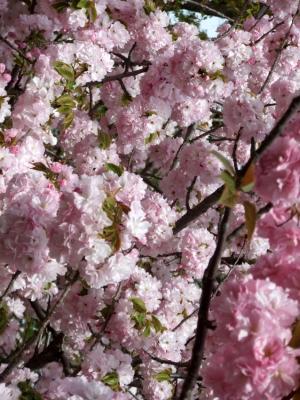 2011_0417ブログ0138