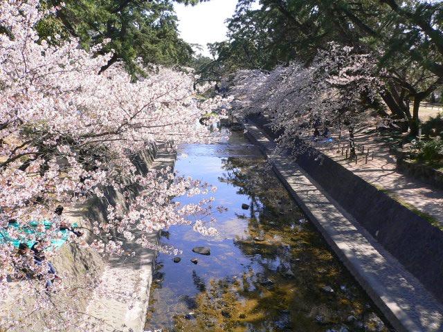 syukugawa10040804.jpg